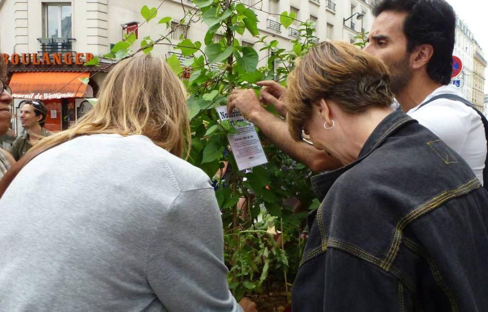 c595_incredible_edible_todmorden_france_sciences-et-vie-junior_agriculture_urbaine_autosuffisance_alimentaire_paris_incroyables_comestibles_w960