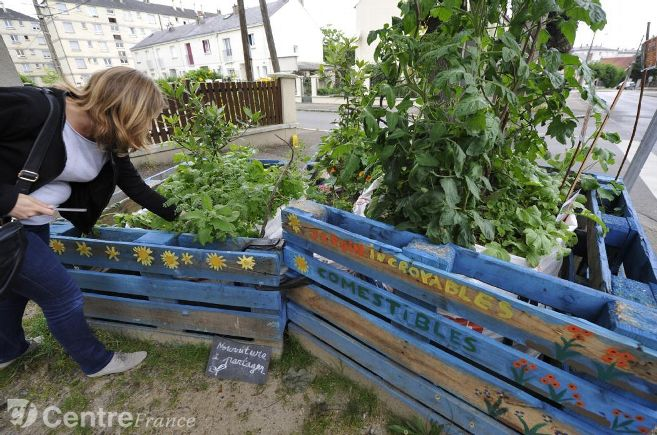 incroyables-comestibles-olivet_credit-photo-la-republique-du-centre