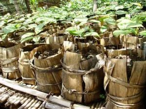 Incroyables-Comestibles-RD-Congo_incredible-edible-congo36