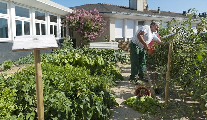 Jardin partagé à l'hôpital d'Angers